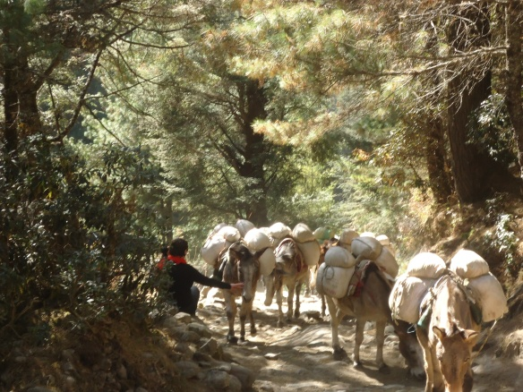 Donkeys on the trail to EBC