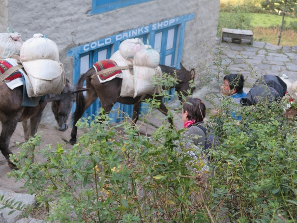 Loaded donkeys on the Everest Base Camp trek