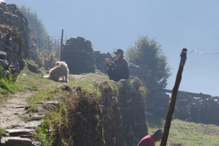 Taking a phot of a lodge dog in Khumjung in late September